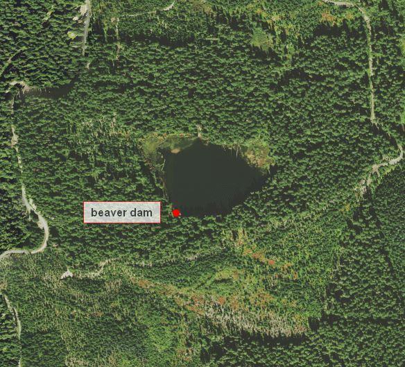Round-Lake-beaver-dam1.jpg